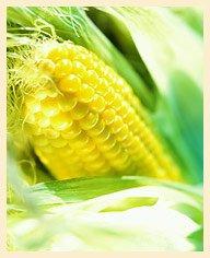 Кукурузные рыльца для похудения