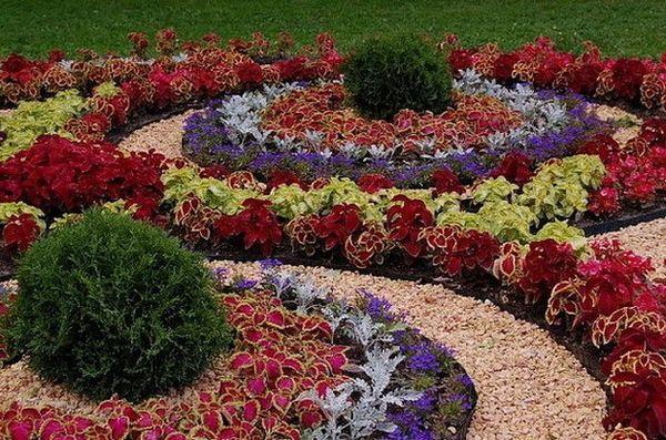 растения-в-цветнике