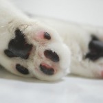 Как ухаживать за подушечками лап собак?