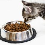 Готовые промышленные корма для кошек
