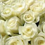 Выбираем цветы оптом в интернет магазине