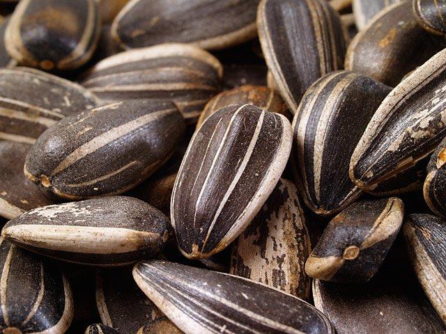 semena-podsolnechnika-poleznye-svoystva