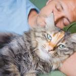 Приучаем кошку к новому дому