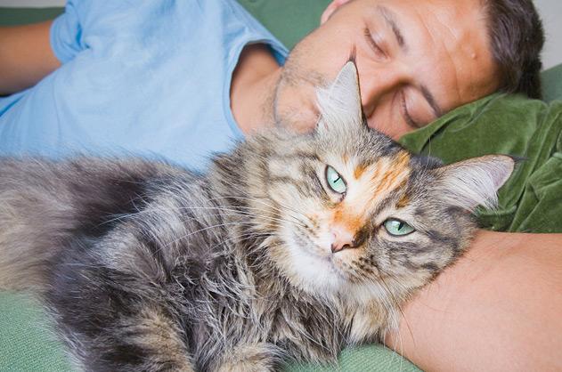 Как усыпляют кошек