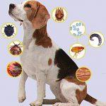 Как применять противопаразитные средства для собак?