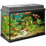 Кого можно завести в аквариуме кроме рыб?